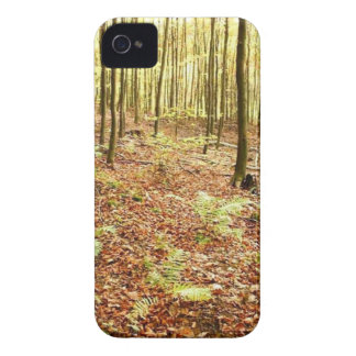 OLD TREES WITH LEAVES ON GROUND IN AUTUMN iPhone 4 COVER