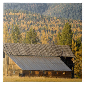 Old wooden barn with autumn tamaracks near tile