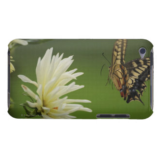 Old World Swallowtail Flying Barely There iPod Covers