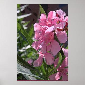 Oleander Art Poster