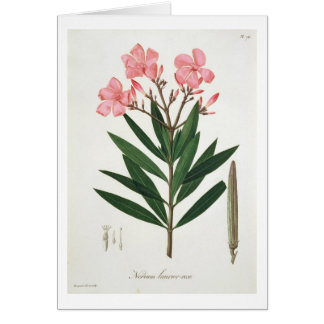 Oleander from 'Phytographie Medicale' by Joseph Ro Card