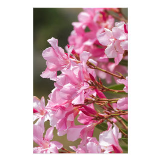 oleander in the garden stationery