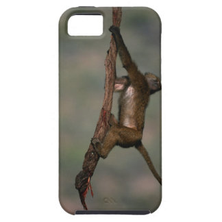 Olive baboon (Papio anubis) climbing on branch, iPhone 5 Covers