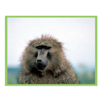 Olive Baboon Post Card