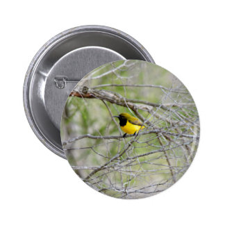 OLIVE BACKED BIRD IN TREE RURAL  AUSTRALIA 6 CM ROUND BADGE