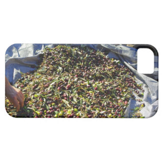 Olive collection iPhone 5 cover