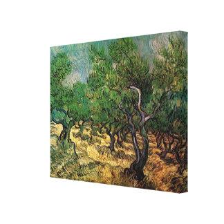 Olive Grove by Vincent van Gogh Canvas Print