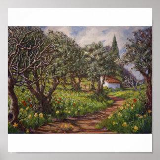 Olive Grove in Springtime Poster