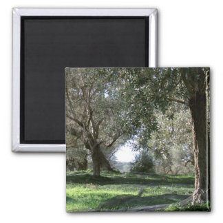 Olive Grove Magnet