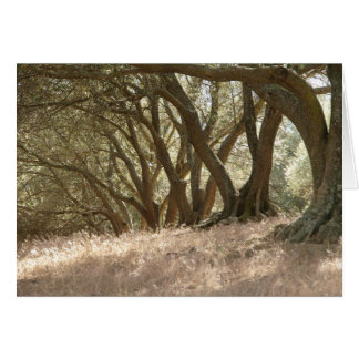 Olive Grove Note Card