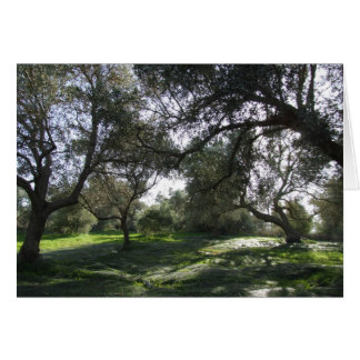 Olive Grove View Card