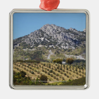 Olive Groves Christmas Ornament