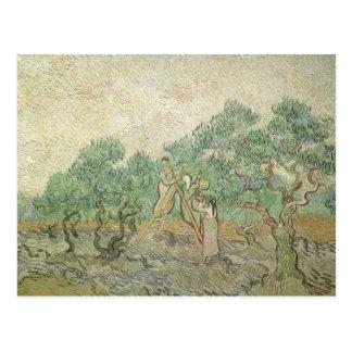 Olive Picking by van Gogh, Vintage Impressionism Postcard