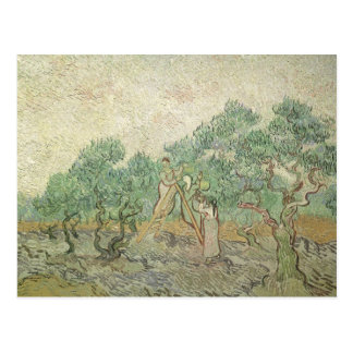Olive Picking by Vincent van Gogh, Vintage Art Postcard
