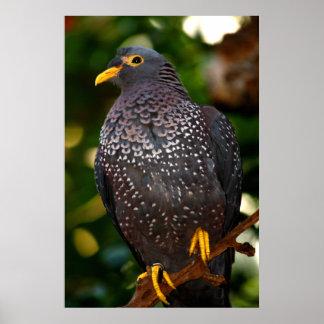 Olive Pigeon Canvas Print
