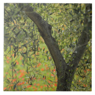 Olive Tree, Castiglione d'Orcia, Siena Province, Tile