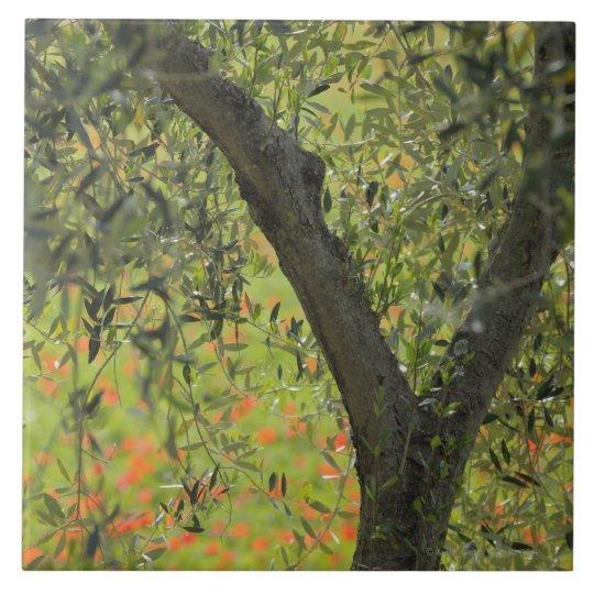 Olive Tree, Castiglione d'Orcia, Siena Province, Tile