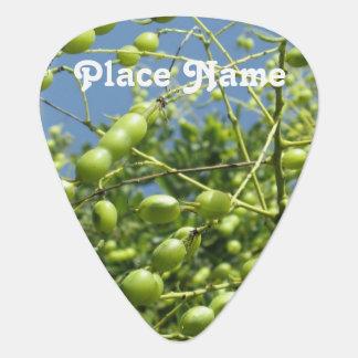 Olive Tree in Israel Plectrum