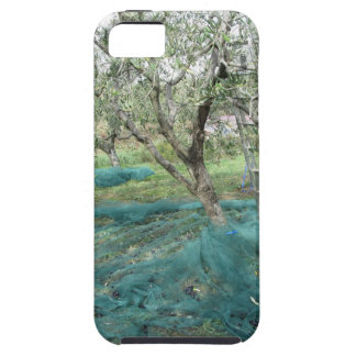 Olive tree in the garden iPhone 5 cases