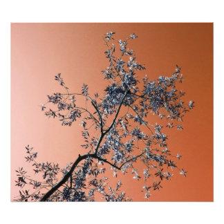 olive tree photo print