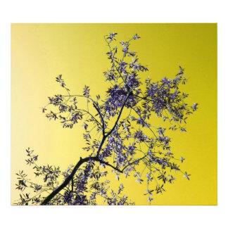 olive tree photograph