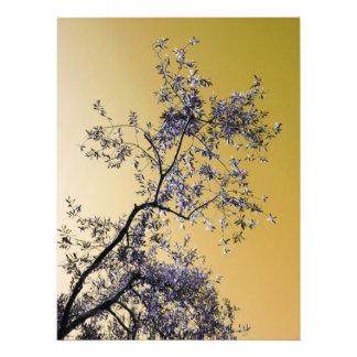 olive tree art photo