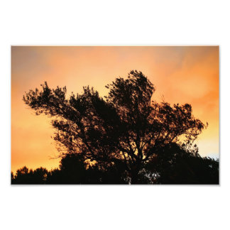 Olive Tree Silhouette At Sunset Photo