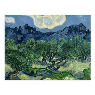 Olive Trees by Van Gogh Postcard