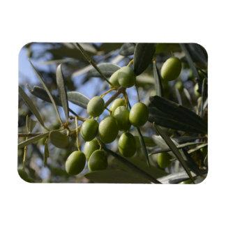 Olive Trees Rectangular Photo Magnet