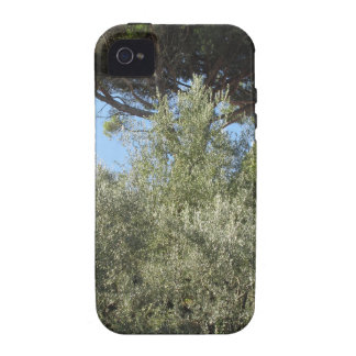 Olive trees with pine tree as background Case-Mate iPhone 4 covers