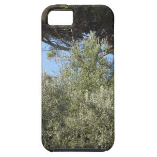 Olive trees with pine tree as background tough iPhone 5 case