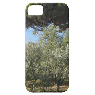 Olive trees with pine tree as background iPhone 5 covers