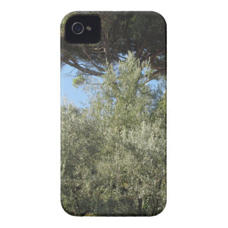 Olive trees with pine tree as background Case-Mate iPhone 4 case