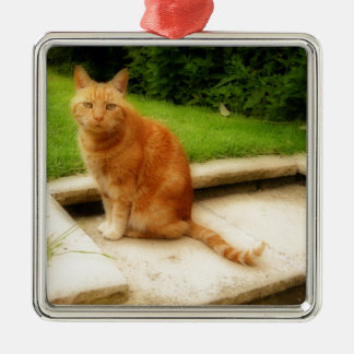 Oliver Cat Christmas Ornament