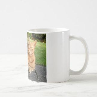 Oliver Cat Mugs