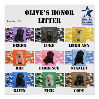 Olive's honor Litter Puppy Poster