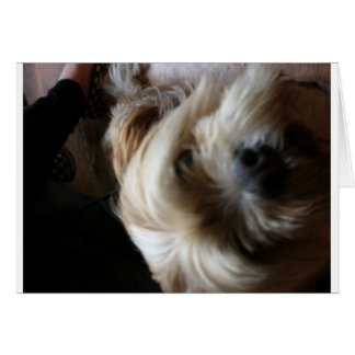Ollie dog lhasa apso head upside down surprise card