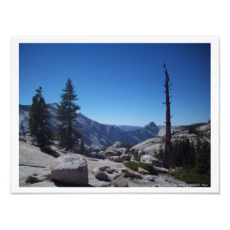 """""""Olmsted's Tree Trinity"""" Yosemite Valley Poster Photographic Print"""