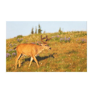 Olympic National Park, Hurricane Ridge 2 Canvas Print