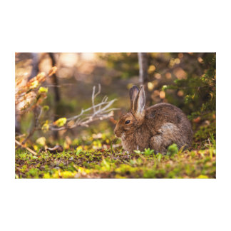 Olympic National Park, Hurricane Ridge 5 Canvas Print