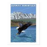 Olympic Peninsula, WashingtonFishing Eagle Post Cards