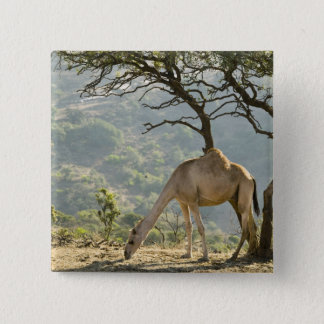 Oman, Dhofar Region, Salalah. Camel in the 15 Cm Square Badge