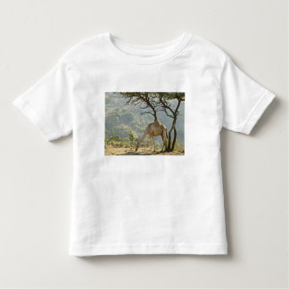 Oman, Dhofar Region, Salalah. Camel in the Toddler T-Shirt