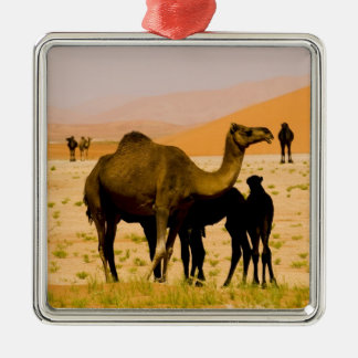 Oman, Rub Al Khali desert, camels (dromedaries), Silver-Colored Square Decoration