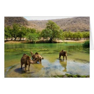 Oman, Wadi darbat, dromedaries pasturing in the Greeting Card