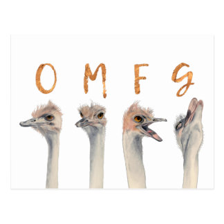 OMFG Ostriches Postcard