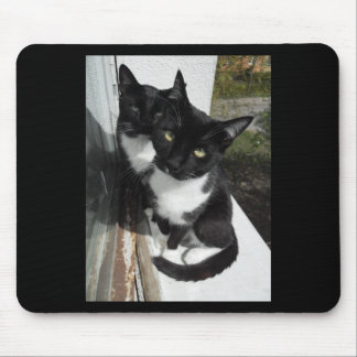 Ominous Cats Mouse Pad