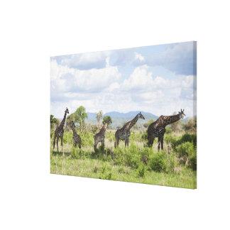 On safari in Mikumi National Park in Tanzania, 2 Canvas Print