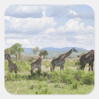 On safari in Mikumi National Park in Tanzania, 2 Square Sticker
