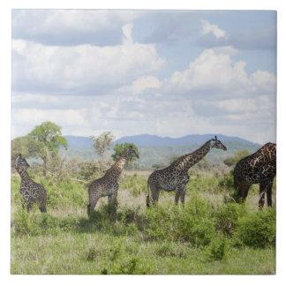 On safari in Mikumi National Park in Tanzania, 2 Tile